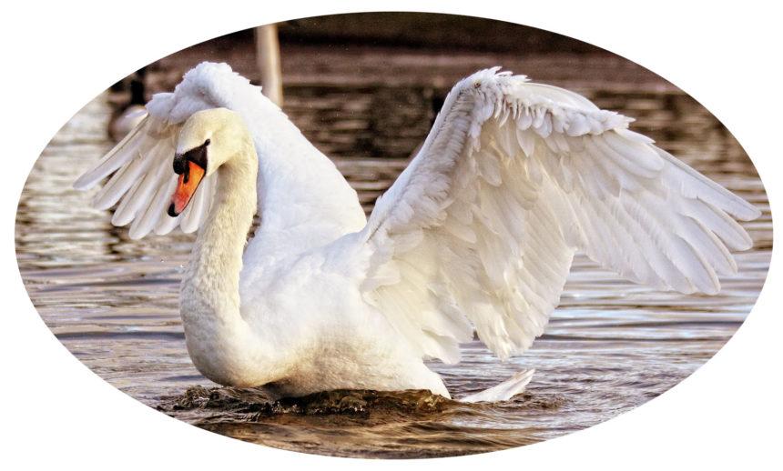 Monthly Calendar Template Landscape Swan